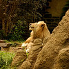 Zoos : 4 galleries with 197 photos